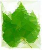 Triangulated лист вина Стоковое Фото
