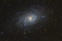 Triangulum星系 库存图片