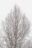 Trianlge塑造了用雪和冰盖的详细的树 免版税图库摄影
