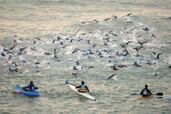 Triathletes op het Zwemmen gebeurtenis royalty-vrije stock afbeelding