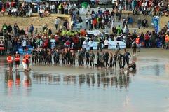 Triathletes professionnels Photographie stock libre de droits