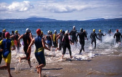 Triathlon. Competitors in Triathlon entering the water for the swimming leg Royalty Free Stock Image