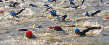 Triathlon competitors at swimming stage Royalty Free Stock Photos