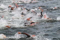 Triathlon, many swimming men Royalty Free Stock Images