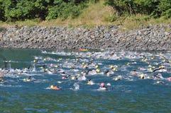 Triathlon, nuotatori. Immagine Stock Libera da Diritti