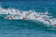 Triathlon. Simming athletes in a triathlon contest royalty free stock photography