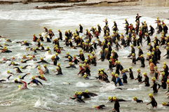 Triathlon start. Group of triathletes running into the sea water at the start of the IRONMAN triathlon competition on the 18. March 2007 in Port Elizabeth, South Stock Photography