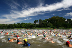 Triathlon Swim. Men's start in a triathlon Royalty Free Stock Photography
