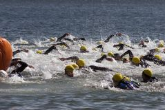 Triathlon Swim Start Stock Images