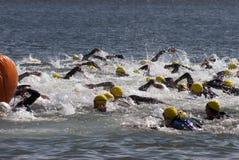 Triathlon swim start Stock Images