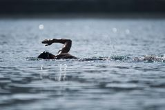 Triathlon swimmer Royalty Free Stock Photography
