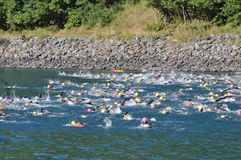 Triathlon, swimmers. Royalty Free Stock Image