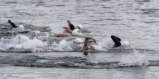 Triathlon swimmers. Athletes competing in the swim leg of a triathlon stock photos