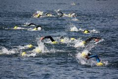 Triathlon swimmers. During a competition in a lake Royalty Free Stock Photography