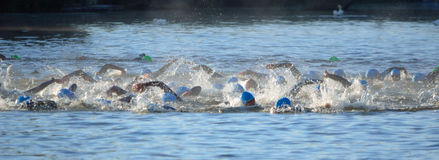 Triathlon swimmers in the river Ouse. At St Neots Stock Photos