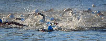 Triathlon swimmers in the river Ouse. Triathlon swimmers competing in the river Ouse Stock Image