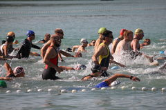 Triathlon swimmers Royalty Free Stock Image