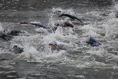 Triathlon swimming triathletes sport healthy exercise. Triathletes during a swimming section of a race wave at the London Triathlon in Docklands Stock Photography