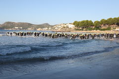 Triathlon triathlete sport healthy exercise swimming. A big group of triathletes enter the sea at the start of the swim leg of Challenge Peguera, a half distance Royalty Free Stock Photos