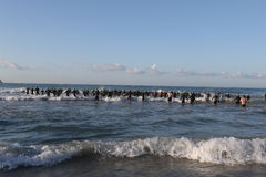 Triathlon triathletes sport healthy exercise swim. Triathletes enter the sea for the swimming leg of Challenge Peguera, a half distance ironman race, in Majorca Royalty Free Stock Image