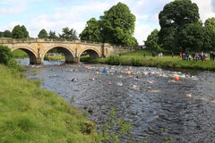 Triathlon triathletes sport healthy exercise swimming. Triathletes swimming in the River Derwent during the Peak District Triathlon in Derbyshire, England Stock Photo