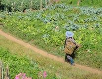 Tribù della collina di Hmong con il canestro Fotografie Stock Libere da Diritti