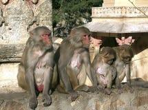 Tribù della scimmia Immagini Stock