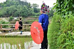 Tribù di Dong con gli ombrelli ed i costumi tradizionali in porcellana Fotografie Stock Libere da Diritti