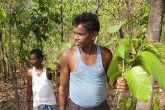 Tribal com o sarai santamente das folhas no jharkhad Imagem de Stock Royalty Free