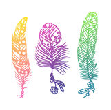 Tribal ethnic colorful feathers creative art concept vector illustration Royalty Free Stock Photo