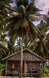 Tribal Hut. Tribal Native hut with palm tree out front Stock Image