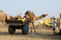 Tribal people are preparing to traditional cattle fair holiday,India royalty free stock photo