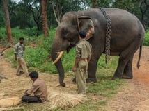 Tribal people and their elephant in Ayarabeedu forest, India. Ayarabeedu forest, Karnataka, India - November 1, 2013: Three tribal men and their dark skinned royalty free stock image
