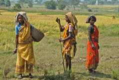 Tribal Poverty in India. October 28,2011 Dukru,Purulia,West Bengal,India,Asia-Women working at the agricultural field in a remote village of West Bengal Royalty Free Stock Photo