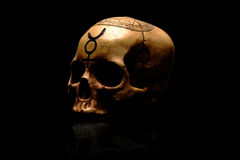 Tribal Skull. Picture of a tribal skull in dark lighting on black background Royalty Free Stock Image