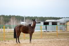Horses on a spring walk in the field. Tribal spotted horse on a spring walk in the field stock image