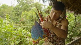 Tribe man making feather headgear. Indigenous cooking, handicrafts and art on amazonian village in Ecuador stock video