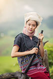Tribe. S on rice fields in the morning, in beautiful costume dress,farmer grow rice in the rainy season,asian farmers grow rice in the rice field,Traditional stock photo