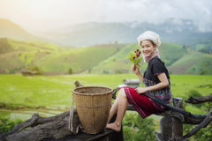 Tribe. S on rice fields in the morning, in beautiful costume dress,farmer grow rice in the rainy season,asian farmers grow rice in the rice field,Traditional royalty free stock image