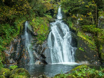 Triberg waterfalls and forest around Royalty Free Stock Images