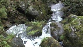 Tribergwatervallen in het Zwarte Bos stock footage