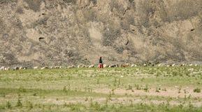 Tribo do monte com rebanho Imagem de Stock Royalty Free