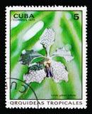 Tribulet της Vanda gilbert, ορχιδέες serie, circa 1973 στοκ εικόνες