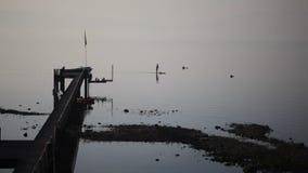 Tribune omhoog paddler dichtbij een pijler tijdens zonsopgang stock footage