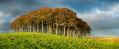 Tribune van Beukbomen onder een Dramatische Hemel Stock Afbeeldingen
