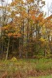 Tribune van bomen met dalingsgebladerte Royalty-vrije Stock Foto