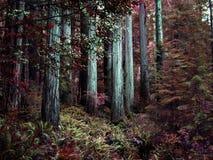 Tribune van Californische sequoiabomen Stock Afbeeldingen