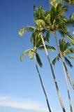 Tribune van palmen tegen een blauwe hemel Stock Foto