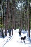 Tribune - weg in het Bos Stock Afbeeldingen