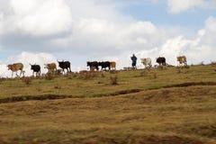 Tribus locales en área de la protección de Ngorongoro fotos de archivo libres de regalías